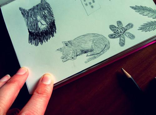 Cat Sketching