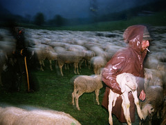Sheperds under the storm (giancarlo rado) Tags: people italy alps analog foto sheep flock showcase alpi trentino sheperd pecore veneto carlzeiss travell pastori sheperds gregge workingpeople transumanza nordest lagorai italiansheperds associazionedeipastorideltriveneto picturespeopleitaly