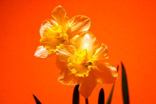 On orange I