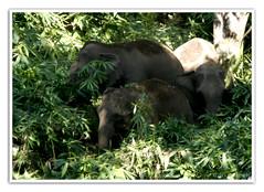 (Diji's Photography) Tags: india closeup canon eos sigma kerala dslr 18200 dfc 400d malayalikkoottam expeditiontothewilds kfm3 malayalikkottamkfm3