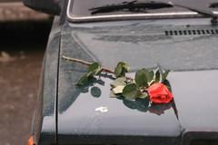 Abandonded Flower