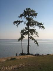 Along the James River, VA (smokejmt) Tags: trees tree history beach water virginia historic williamsburg colonialwilliamsburg jamestown jamesriver 5photosaday jamestownisland lifetravel