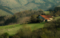 Caserio (zubillaga61) Tags: paisaje caserio ladscape ovejas rebao euskaherria lazkaomendi