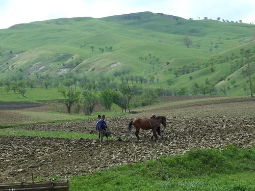 agricultura in plug de lemn