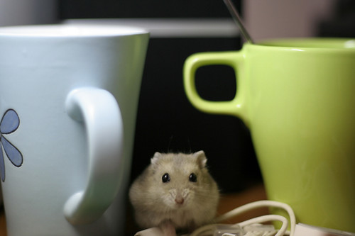 Hamster With Coffee Cups
