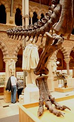 cast of T. rex tail and leg (Margaret Stranks) Tags: uk history museum university natural tail leg cast oxford rex tyrannosaurus