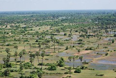 Cambodian Fields