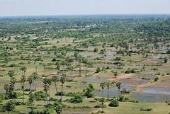 Cambodian Fields