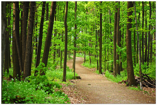 Forest Path by Jeff Power, on Flickr