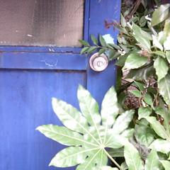 【写真】ミニデジで撮影した青ドアと葉っぱ