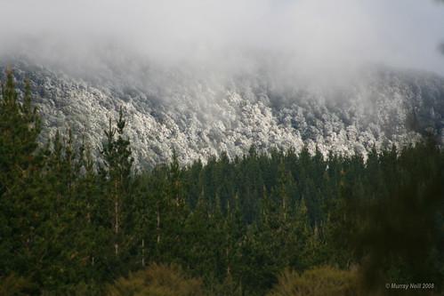 Snow on the Whangamoas
