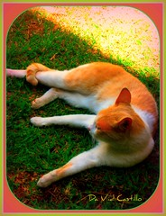 LET ME TAKE MY SUN BATH (IDIAY) Tags: light luz grass female cat shadows sombra sunbath lazy baodesol thebestyellow
