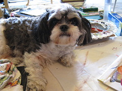 Dog obstructing painting (scroobious_pip) Tags: dog wicket