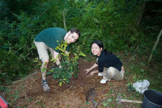 tree_planting_9185