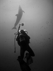 Diving Underwater (javiy) Tags: sky underwater dolphin bubbles scuba diving cielo submarino losgigantes submarinas golddragon sd870 livinginparadise wpdc17 epiceditsselection photoartbloggroup