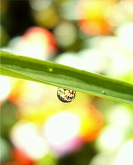 Grass Tear (Stanley Zimny (Thank You for 19 Million views)) Tags: macro nature water colors grass drops waterdrop dof dew tear