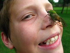 cicada on a boy's face