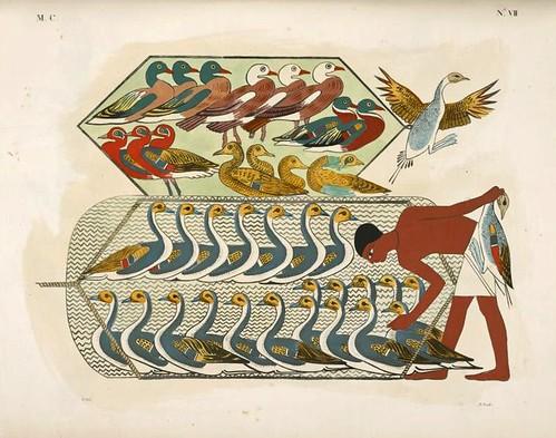 07- Representacion de aves de pantanos y otras encerradas en una red