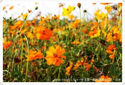 20080809三芝淡水全家遊 (9)