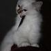 Remco's kitten 13