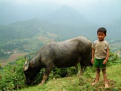 Boy with Buffalo, Sapa, Vietnam (amyswear) Tags: travel vietnam hoian waterlillies sapa waterbuffalo ricepatties