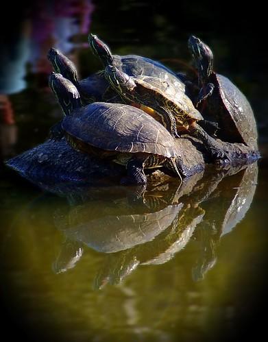 tartarugas no parcão