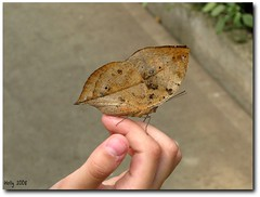 Looks like a leaf on that little girl's hand (Loves_TaiShan) Tags: butterfly conservatory magicwings southdeerfieldma