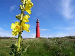 RIMG0709 (Jos Mecklenfeld) Tags: lighthouse flower island wadden flora nederland thenetherlands ricoh vuurtoren friesland schiermonnikoog eiland bloem gx200
