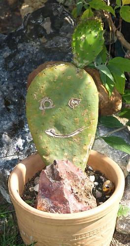 cactus par vous