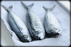 Mackerel (Loua) Tags: food fish mackerel three foods healthy raw fresh whole ingredients seafood oily savoury savory ingredient uncooked mackerels omega3 removedfromadobelightroomfortags