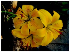 ns permanecemos (Matteus Oberst) Tags: flowers red macro yellow flor amarelo