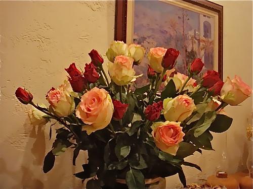 Cotacachi-roses