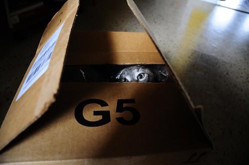 luna in a box.