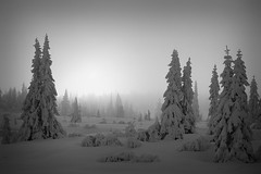after the snowfall (H o g n e) Tags: wood trees winter bw cloud snow norway clouds forest dark landscape landscapes blackwhite frost explore snowfall coolscan blefjell fe2 explored winterforest bildekritikk pprowinner photocontesttnc09