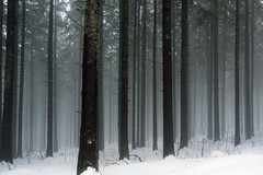 Gloomy View (andywon) Tags: trees mist snow nature fog forest germany bravo schwarzwald blackforest kandel explored