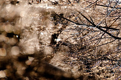... in the dream, I was freezing to death... (nosha) Tags: winter tree ice nature beautiful beauty photography photo nikon december bokeh photograph twig f56 2008 lightroom d300 150mm nosha 18200mmf3556 bokehdots december2008 nikond300