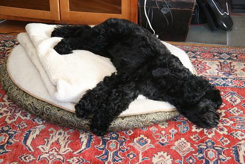 skippy rests