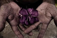 esperança (Jayme Diogo) Tags: flores nikon esperança jayme avô maos d40 diooh