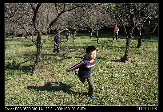 20090103F11清大梅園