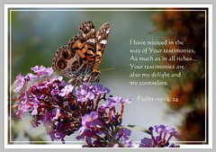 Your Testimonies Are My Delight and My Counselors (honey 77) Tags: nature beautiful butterfly insect god jesus lord christian delight inspirational scriptures paintedlady riches bibleverse counselors testimonies nikond40 concordians theperfectphotographer inspiks|inspirationalpictures