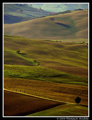 Tuscan Valley (tom911r7) Tags: leica italy tree field hills valdorcia vlux1 tom911r7 thomasbrichta