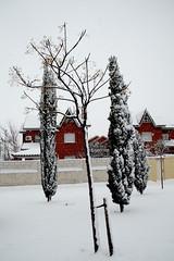 Los gordos y el calvo (Coleccin de das) Tags: nieva
