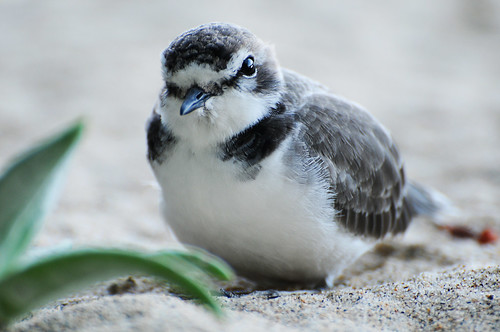 Cute little bird.