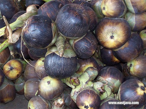 Siwalan Fruit - Tuban - East Java