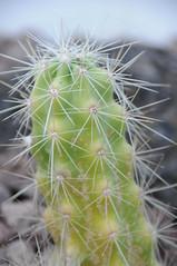 botanico 132 (blum1) Tags: cactus botanico ortobotanico