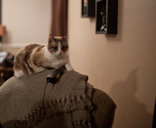 Cat thinks of murder