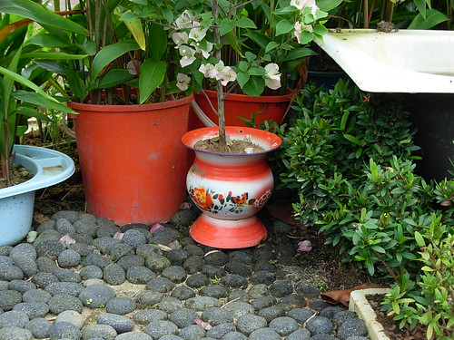 Kampong plants (3) - spittoon