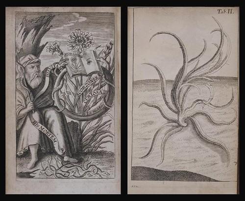 Anchora sacra vel Scorzonera 1666 a