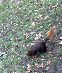 Mutant super-squirrel caught on camera