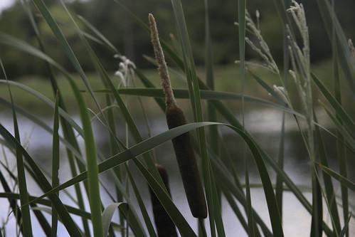 Reedy Pond-11